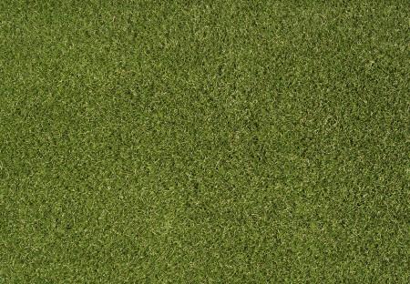 Daisy 40mm Grass