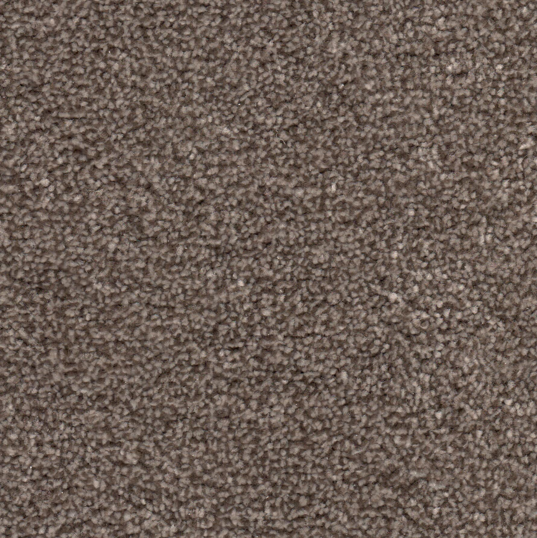 Saxony Carpets Heather Heathers Carpet Lisburn Belfast Carrickfergus Martin Phillips Carpets